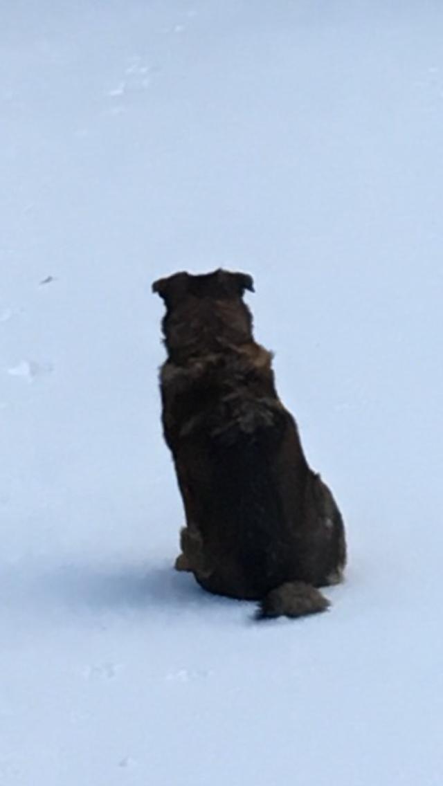 snow scout