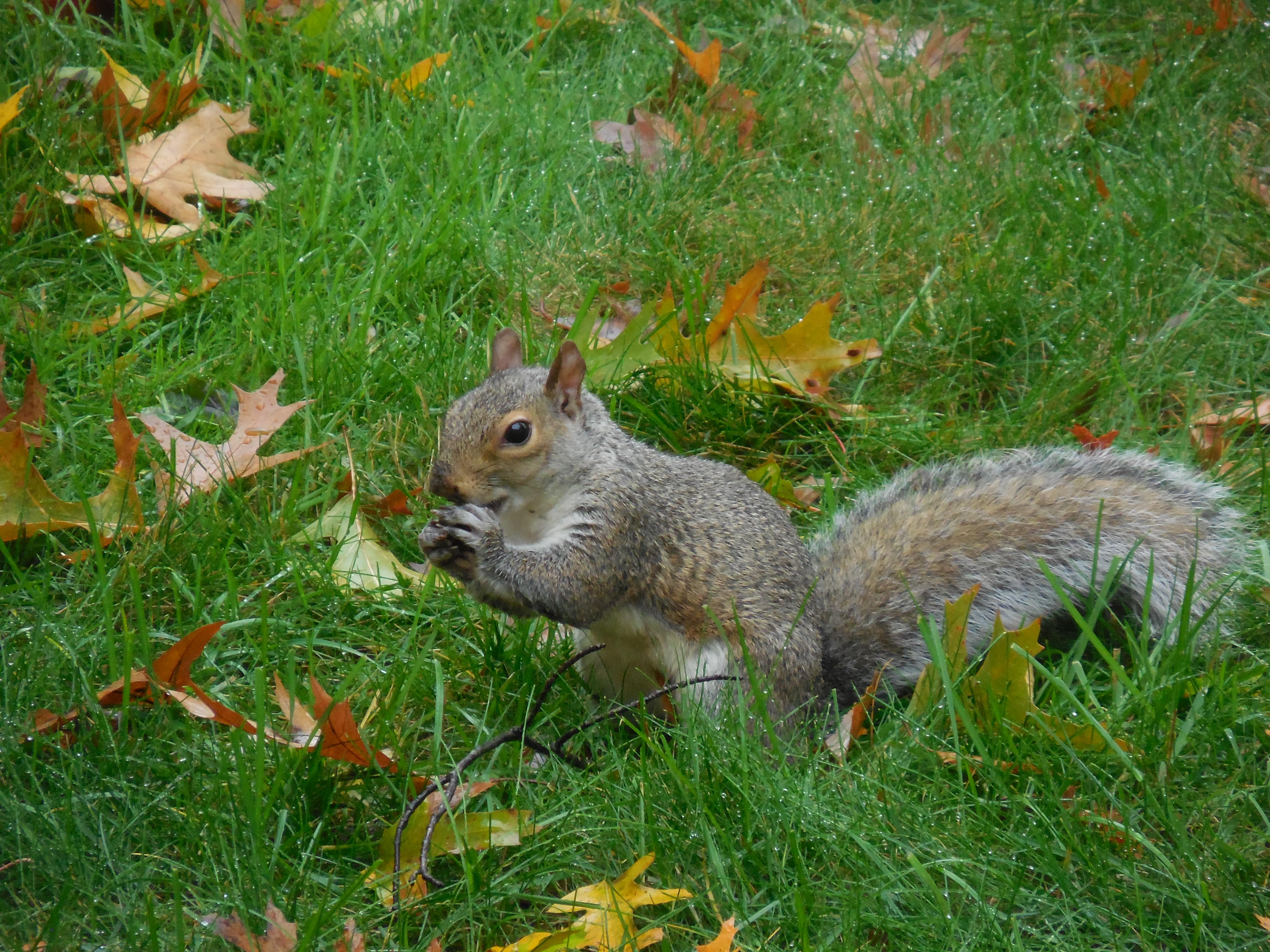 Squirrel work buddy (1)