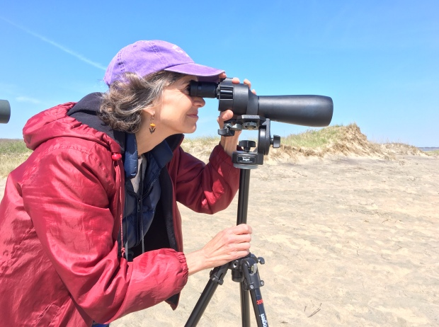 Susan Edwards Richmond_birding with scope